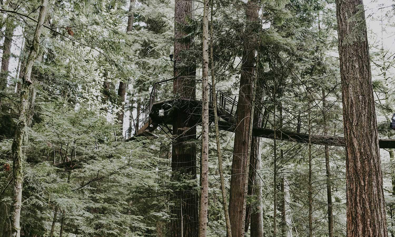 Idyllischer Waldurlaub mitten im Böhmerwald - Ramenai