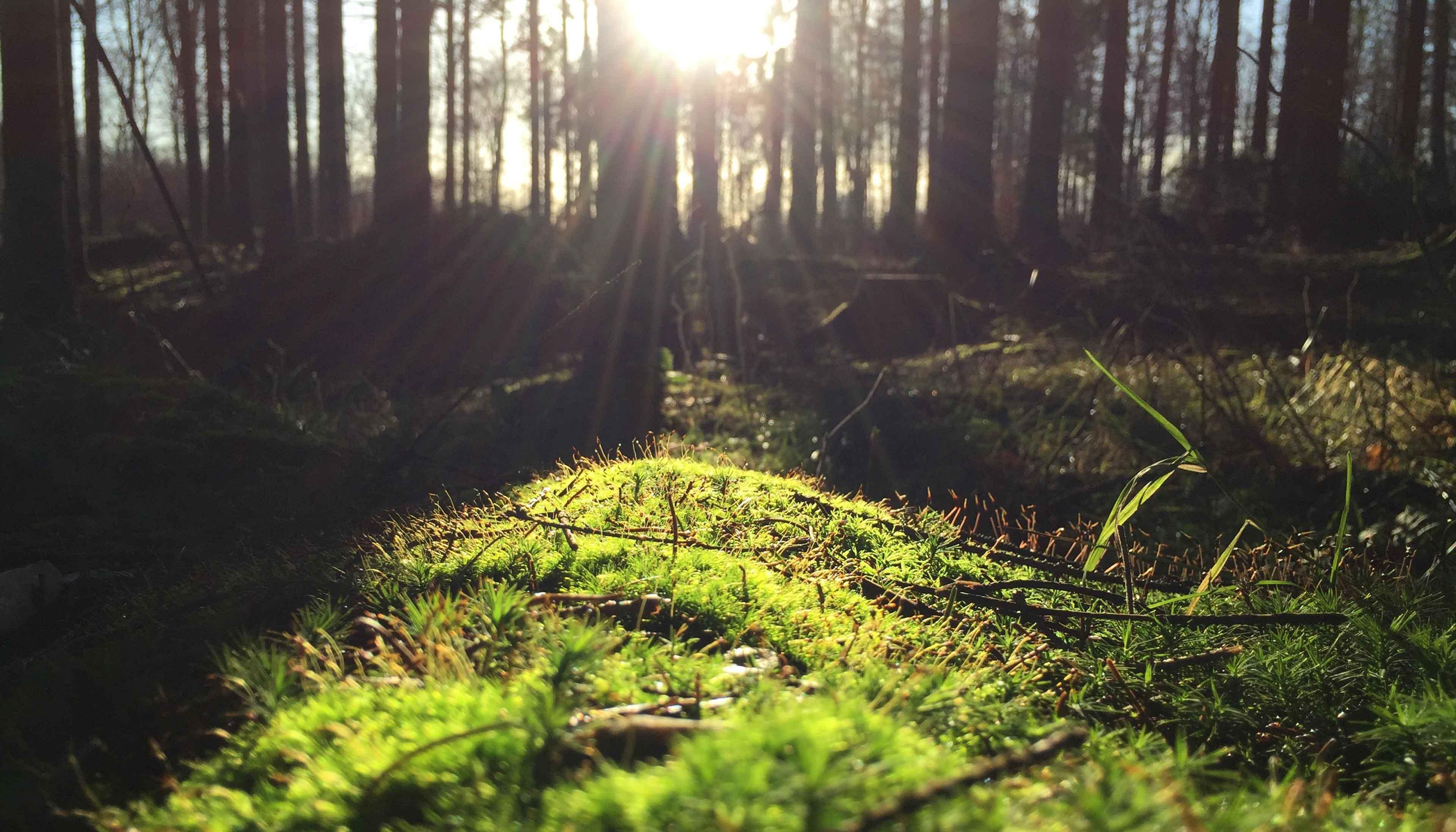 Eindrucksvolle Naturerlebnisse im Böhmerwald - Ramenai