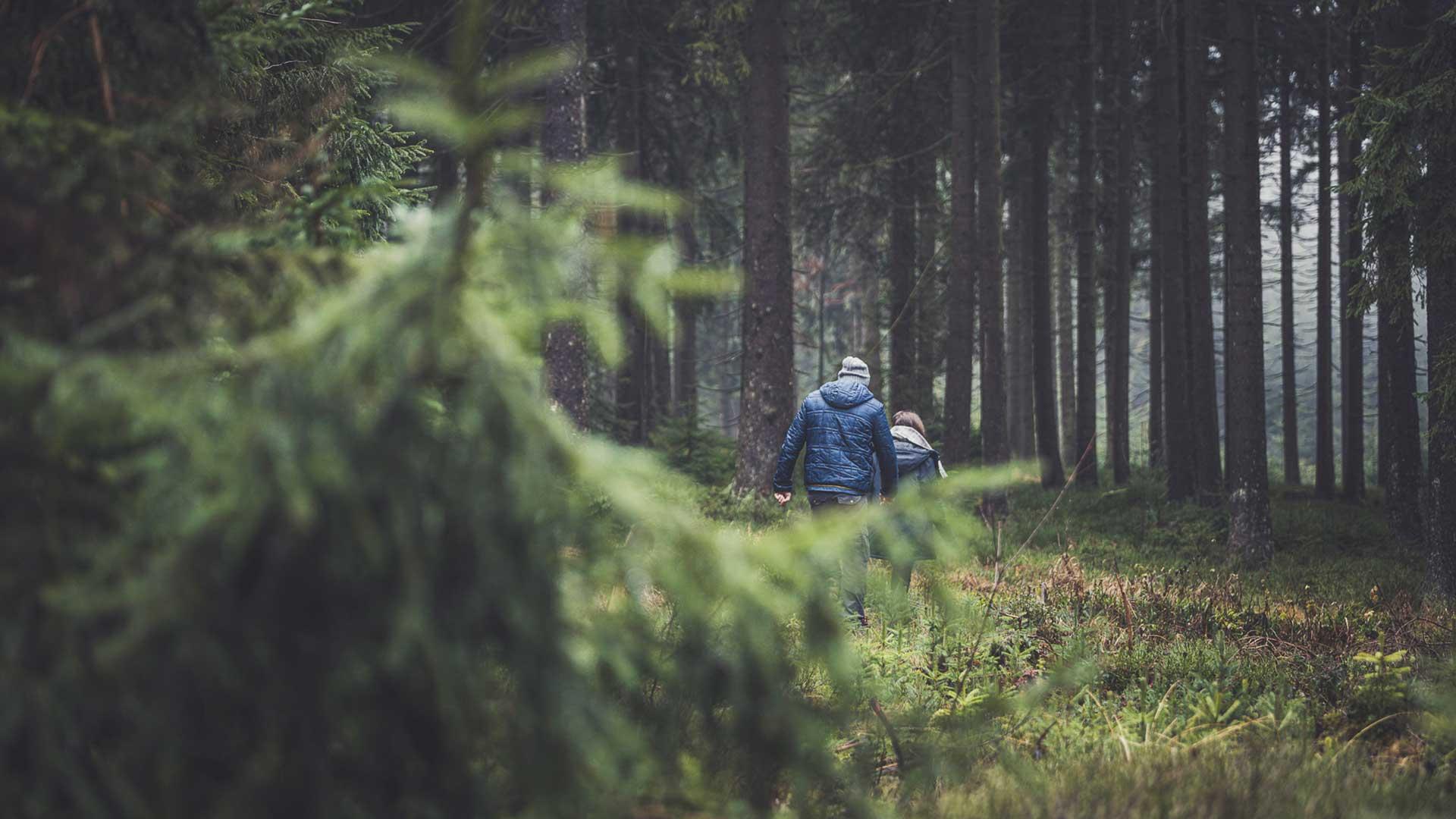 Urlaub im Böhmerwald in Oberösterreich